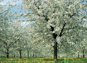 planter-avril-1351243221-l720-h512