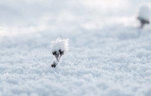 neige-différents-types-e1537800196737